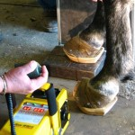 Training on Radiograph of horse hoof with clog.
